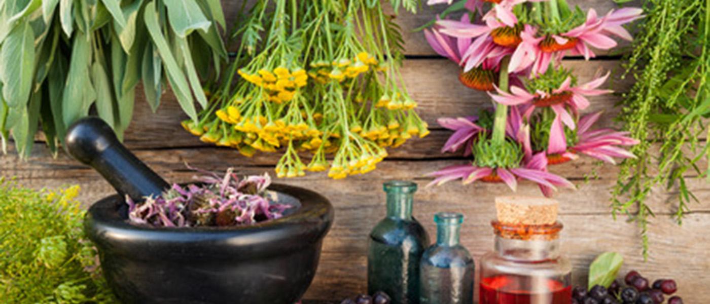 plantes anti inflammatoire