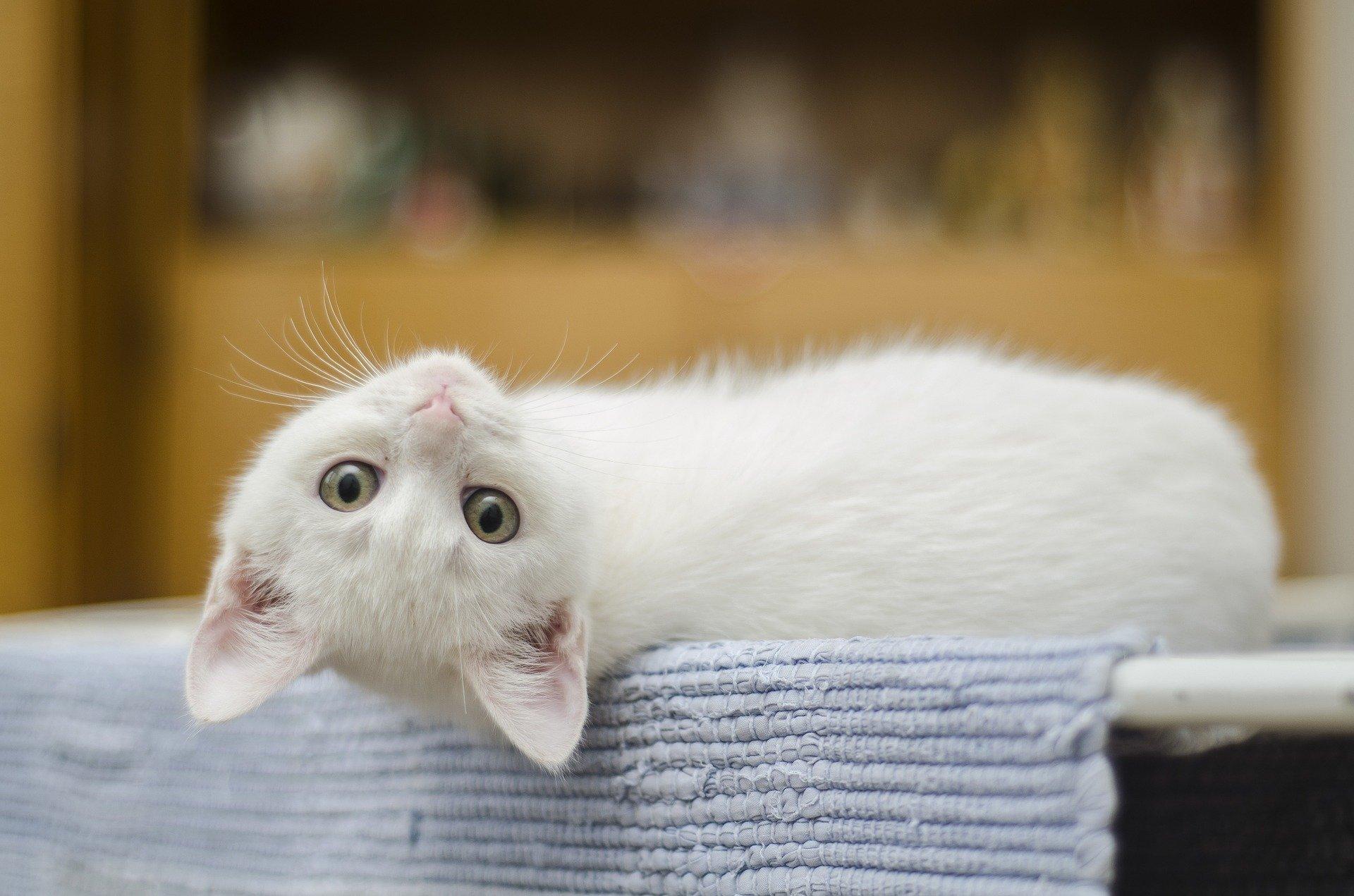 stress chez le chat