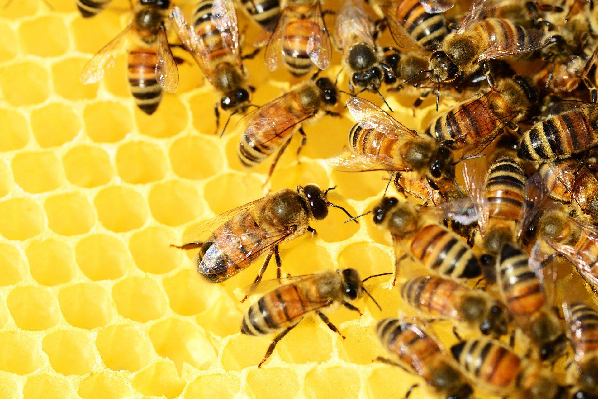lait des abeilles