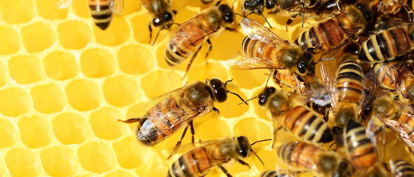 ruche gelée royale
