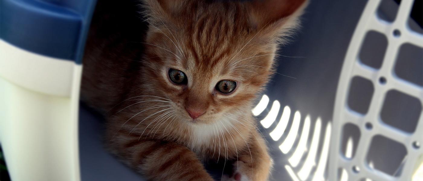 voyage du chat