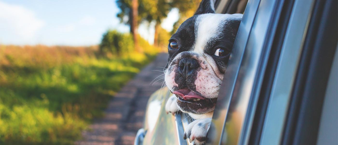 voyage en voiture chien